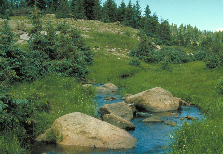 A small stream weaves its way around a few large boulders.  The meadow is hemmed by a line of pines.